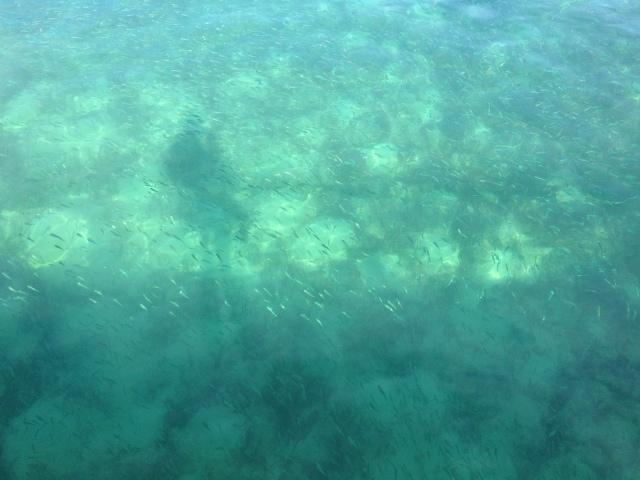 hundreds upon hundreds of tiny fish